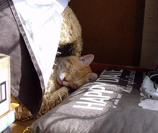 猫ちぐら _a0136293_1247729.jpg