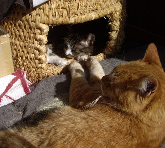 猫ちぐら _a0136293_1248626.jpg