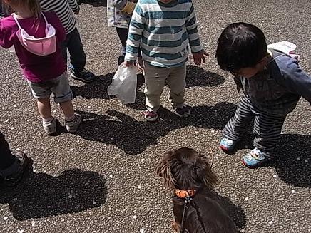 タンポポの咲く大倉山公園♪_b0105897_8104286.jpg