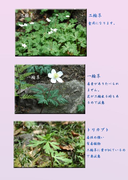 c0051105_17393649.jpg