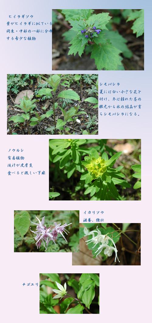 c0051105_18185995.jpg