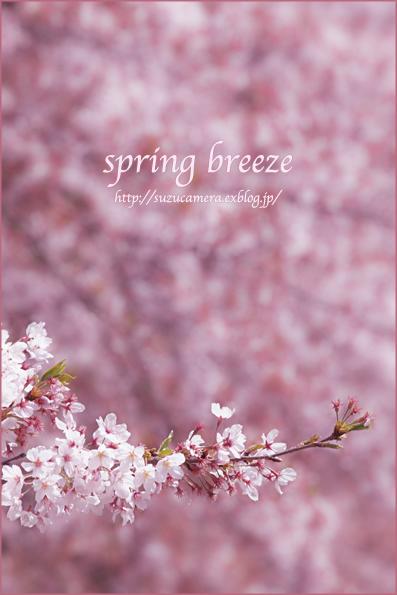 春風_f0100215_22574575.jpg