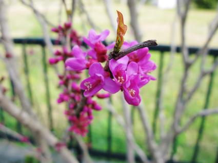 春~冬へ_f0129726_21491340.jpg