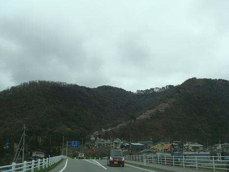 桜の道_a0014840_17575433.jpg