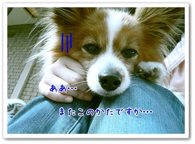 d0013149_103163.jpg