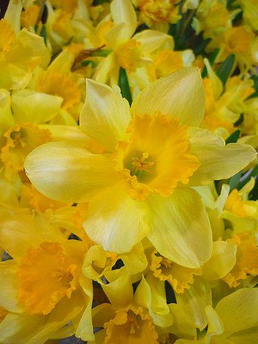春が届きました。。。ルイも一緒のサンデーランチ。。・:*:・゚`☆*† _a0053662_11482750.jpg
