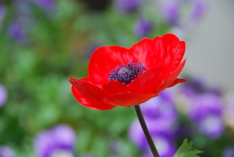 近くの春の花々_c0187781_19494075.jpg