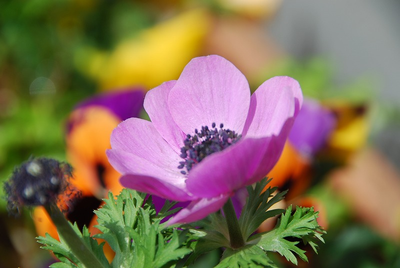 近くの春の花々_c0187781_1950961.jpg
