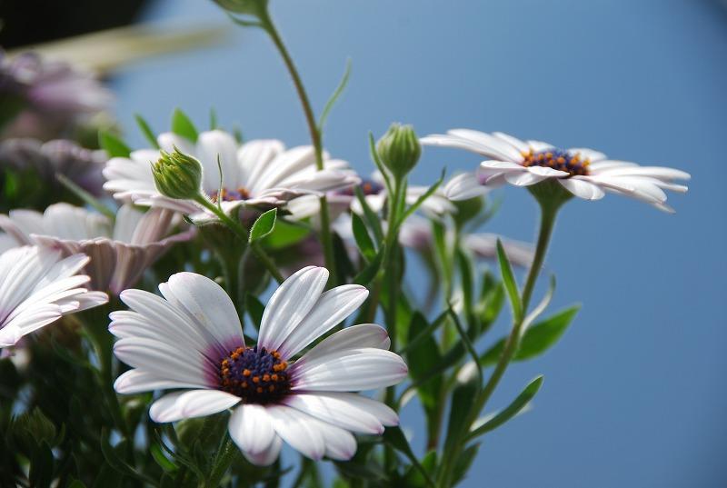 近くの春の花々_c0187781_19562394.jpg