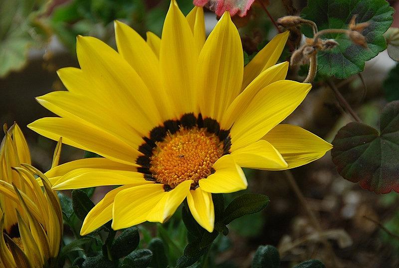 近くの春の花々_c0187781_1958695.jpg