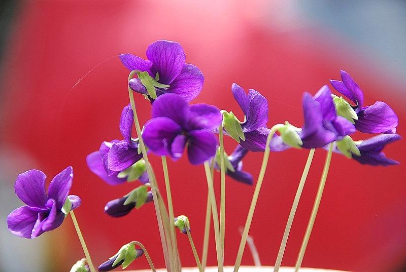 近くの春の花々_c0187781_2002482.jpg