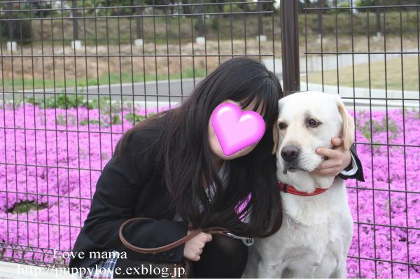 マーガレットと芝桜!!_b0136683_16183337.jpg