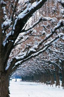 春なのに  2_f0118184_1617112.jpg