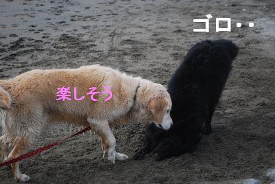 f0109202_11144318.jpg