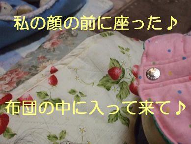 f0179203_8161872.jpg