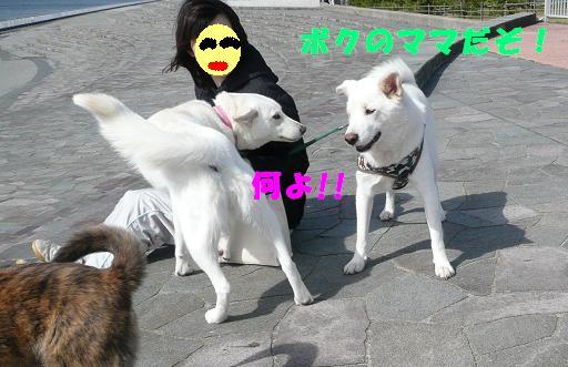 f0121712_12574276.jpg