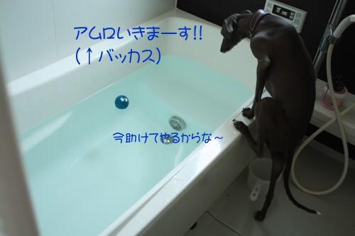f0217153_949251.jpg