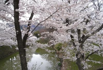 上田城の桜と、信州国際音楽村の水仙_c0110869_23185420.jpg