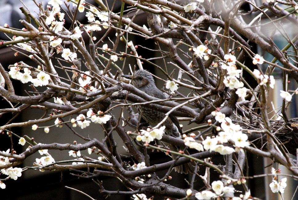 飛んで行きたい『平城京の春』_a0107574_230784.jpg