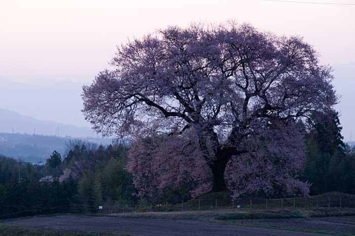 わに塚の桜_c0085877_7211318.jpg