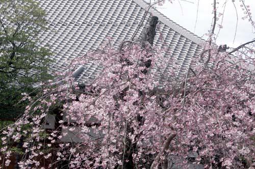 また上野へ行くまで見たこと_f0211178_17025100.jpg