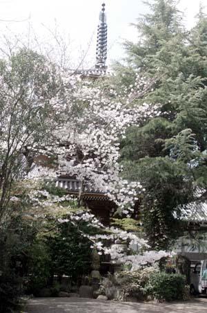 また上野へ行くまで見たこと_f0211178_1703556.jpg