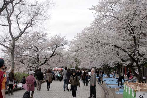 また上野へ行くまで見たこと_f0211178_1713679.jpg