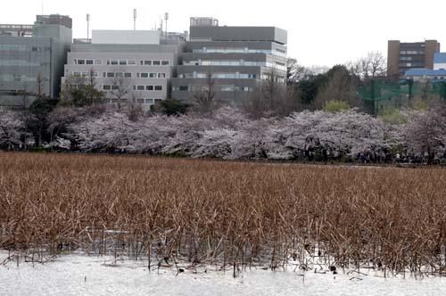 また上野へ行くまで見たこと_f0211178_1714538.jpg
