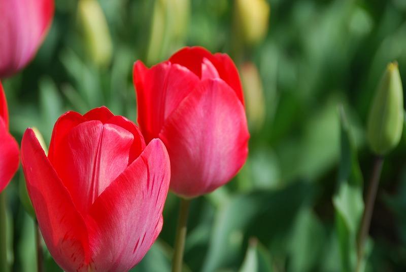 近くの春の花々_c0187781_0143834.jpg