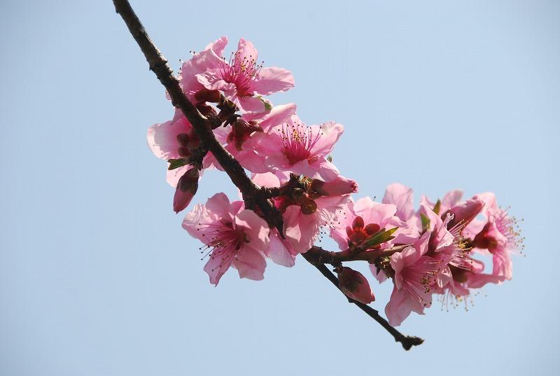 近くの春の花々_c0187781_0162152.jpg