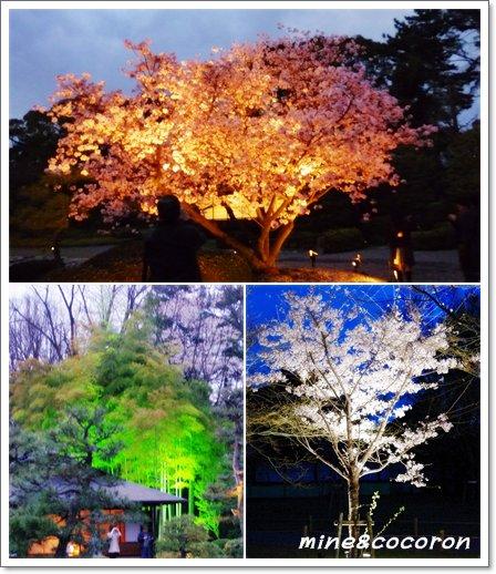 夜桜_a0053987_21573652.jpg