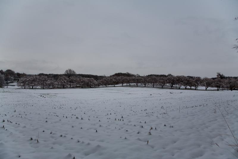 雪と桜と青空と_c0137403_21182217.jpg