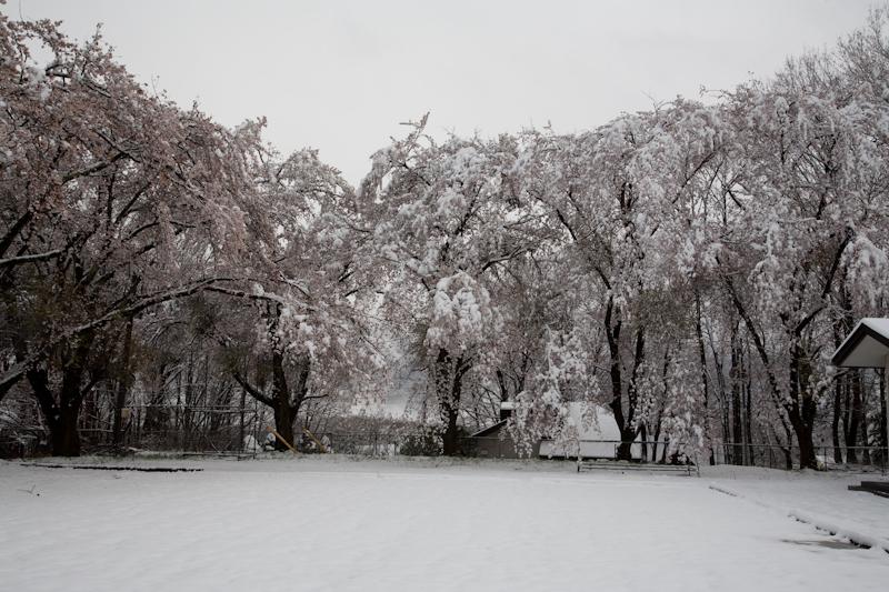 雪と桜と青空と_c0137403_21191397.jpg