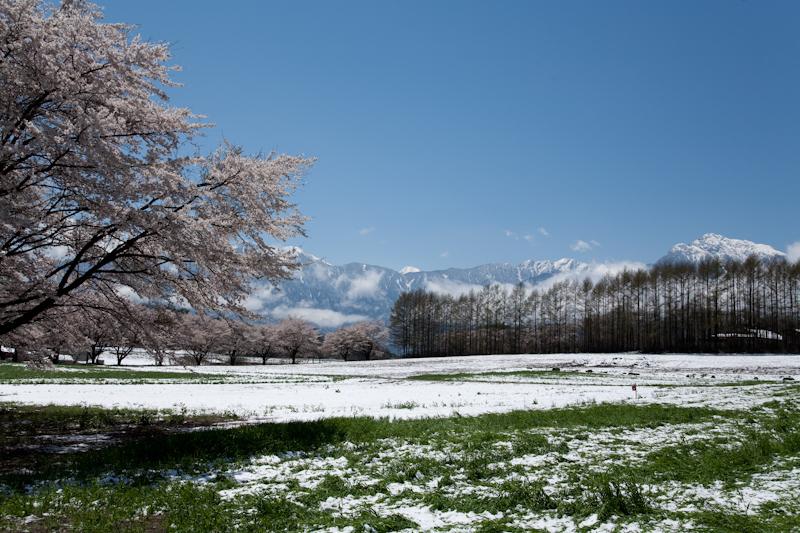 雪と桜と青空と_c0137403_21192946.jpg