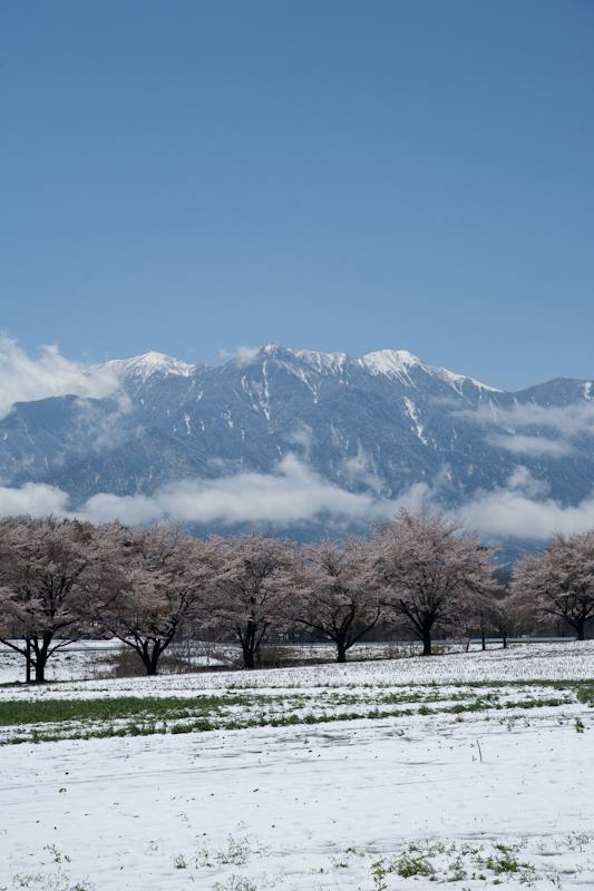 雪と桜と青空と_c0137403_21201984.jpg