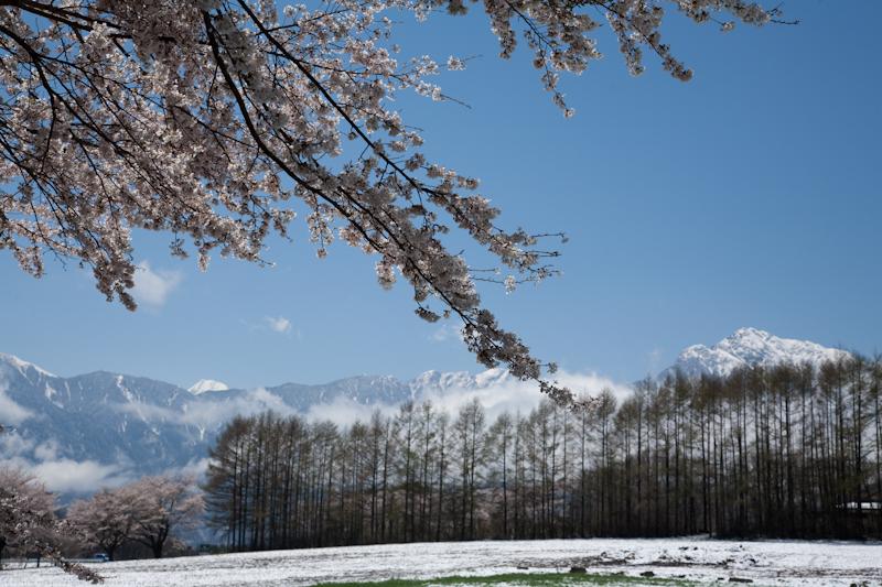 雪と桜と青空と_c0137403_21204077.jpg