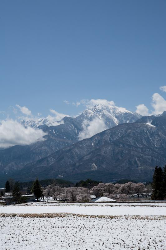 雪と桜と青空と_c0137403_21212582.jpg