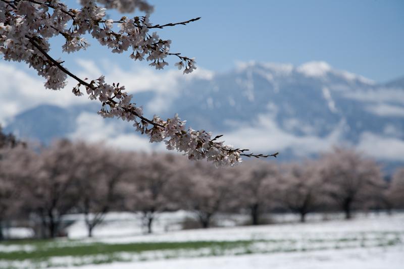 雪と桜と青空と_c0137403_21225516.jpg