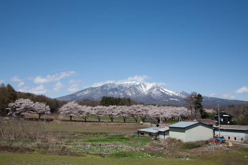雪と桜と青空と_c0137403_21232068.jpg