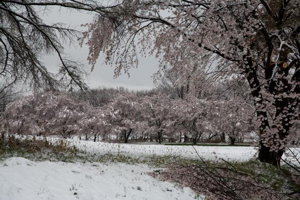 雪と桜と青空と_c0137403_21241167.jpg