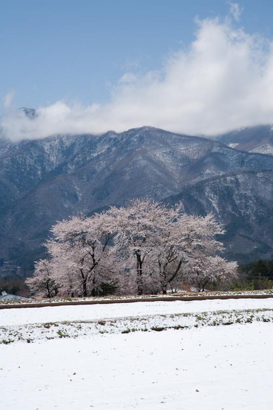 雪と桜と青空と_c0137403_22582559.jpg