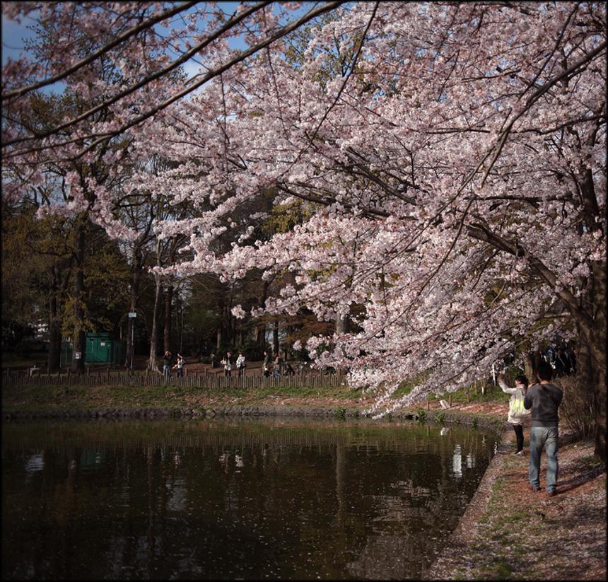 Sakura image 2010 #4_e0022810_1030198.jpg
