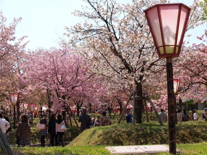 「第20回花のまわりみち」-八重桜イン広島-_c0116915_23574190.jpg