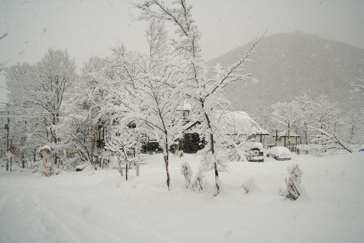 大雪です (◎_◎)_d0012134_1101237.jpg