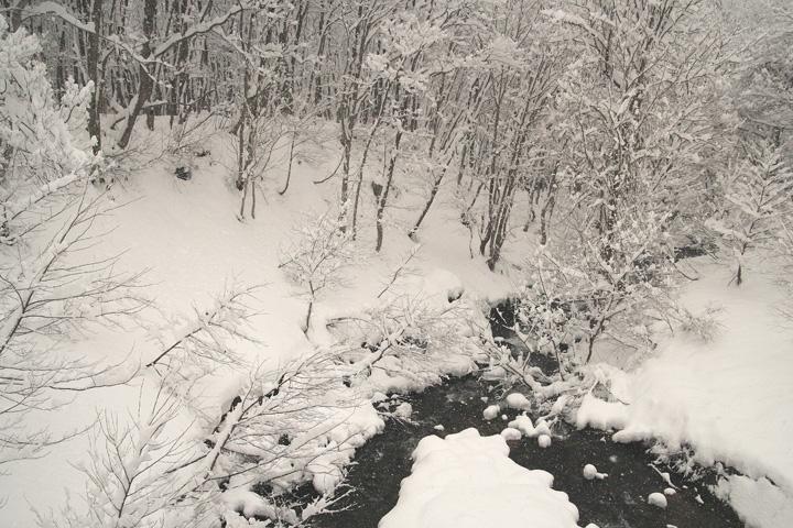 大雪です (◎_◎)_d0012134_116554.jpg