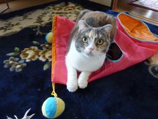猫のお友だち マミちゃん編。_a0143140_22522528.jpg