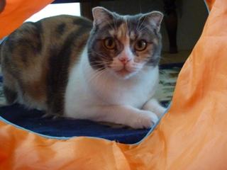 猫のお友だち マミちゃん編。_a0143140_22544093.jpg