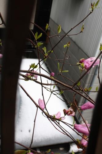 4/17 春の雪。。。_c0118352_17115154.jpg