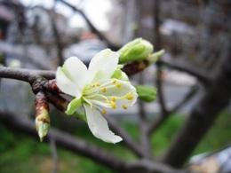 咲きだして良かったァ~_e0099359_21394161.jpg