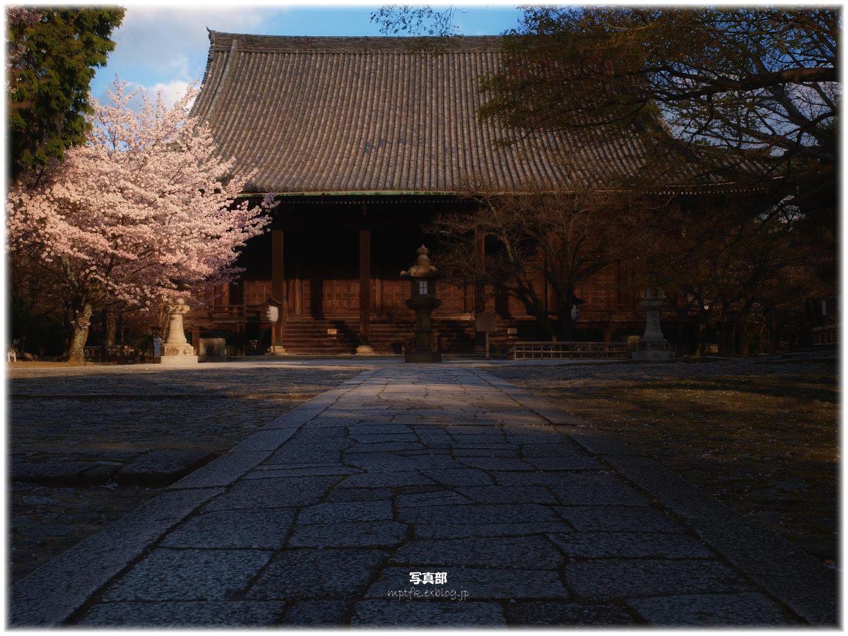 京都 真如堂 桜_f0021869_23332252.jpg